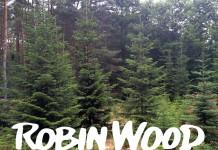 Robin Wood verrät, wo Sie einen Bio Weihnachtsbaum in Ihrer Nähe kaufen können.