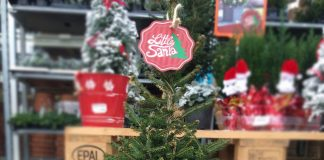 Den Topf-Weihnachtsbaum Little Santa gibt es in mehreren Größen.